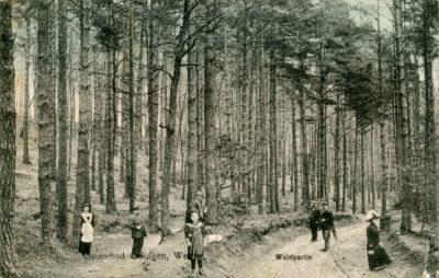 Fragment lasu w Gdyni